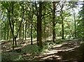 ST6363 : In Lord's Wood by Neil Owen
