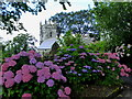 SX0771 : Hydrangeas at the edge of St Helena Churchyard in Helland by Rod Allday
