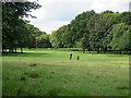 SK5339 : Wollaton Park Golf Course: up the fairway by John Sutton