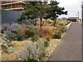 SY6874 : Landscaping near Portland Castle by Robin Stott