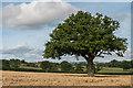 SO4975 : Field of Barley by Ian Capper