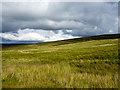 NY6846 : Grassy moorland of Park Fell by Trevor Littlewood