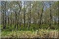 SX2152 : Woodland by A387 by N Chadwick