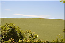 TL5336 : Arable hillside by N Chadwick
