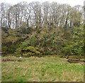 SX2455 : East Looe Valley by N Chadwick