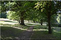 SU8694 : Avenue of trees by N Chadwick