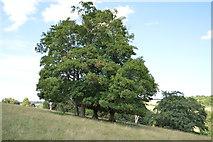 SU8695 : Parkland, Hughenden Park by N Chadwick