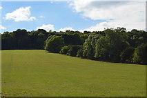 SU8696 : Grassy slope below Woodcock Wood by N Chadwick