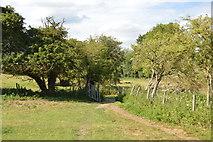 SU8696 : Open gate by N Chadwick