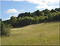 SU8696 : Slope of the Hughenden Valley by N Chadwick