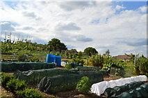 SU8696 : Vegetable plot by N Chadwick