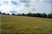 SU8596 : Grassy slope by N Chadwick