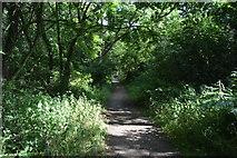 SU8496 : Footpath, Naphill Common by N Chadwick