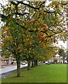 SK6304 : Trees along Wintersdale Road in Leicester by Mat Fascione