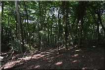 SU8594 : Little Tinker's Wood by N Chadwick