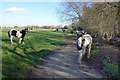 TQ0377 : Horses on the Colne Valley Way by Des Blenkinsopp