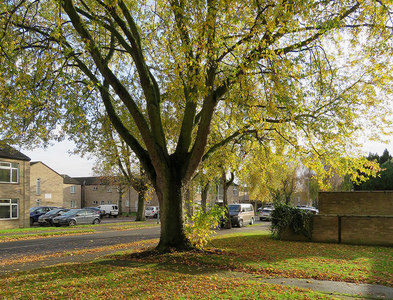 TL4756 : Lichfield Road: light and leaves by John Sutton