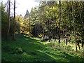 SU7693 : Woodland, Ibstone by Andrew Smith
