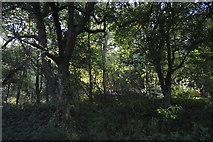 SP4509 : Wytham Woods by N Chadwick