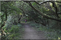 SP4509 : Thames Path, Wytham Woods by N Chadwick
