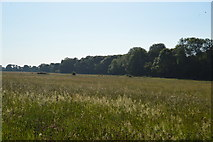 SP4509 : Meadow and Wytham Woods by N Chadwick