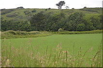 SX5048 : Field, Wembury Point by N Chadwick