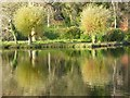 ST7733 : Willow trees reflected in Garden Lake by Philip Halling