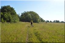 SP4509 : Thames Path by N Chadwick