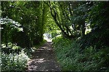 SX4349 : South West Coast Path by N Chadwick