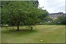 TL4458 : Sidney Sussex College - Fellows' Garden by N Chadwick