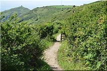 SX4248 : South West Coast Path by N Chadwick