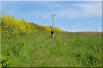 SX4249 : Footpath to Rame Barton by N Chadwick