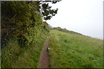 SX4851 : South West Coast path by N Chadwick
