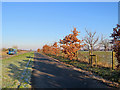 TL4165 : Oaks by the guided busway by John Sutton