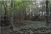TQ3328 : Bridleshaw Wood by N Chadwick