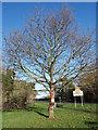 SP8309 : Yarn Bombed Tree beside Risborough Road by Des Blenkinsopp