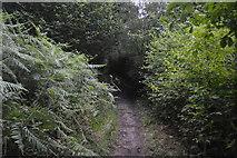 TQ3130 : Footpath, Great Burrow Wood by N Chadwick