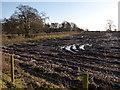 SJ6267 : Cheshire mud by Stephen Craven
