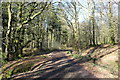 NX6055 : The Yellow Trail, Cally Woods by Billy McCrorie