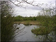 SJ6890 : Rixton Clay Pits Nature Reserve by Keith Williamson