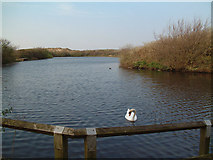 SD3012 : Ainsdale Nature Reserve by Gary Rogers