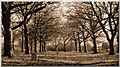 SK3736 : Chaddesden Cemetery by Sam Styles