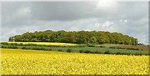 SK5423 : Lewes's Plantation by Chris J Dixon