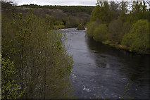 NH9545 : River Findhorn by phil smith