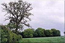 SU7378 : Comp Wood by Rosalind Mitchell