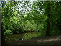TQ3399 : Lake in the woods, Forty Hill by Stephen Dawson