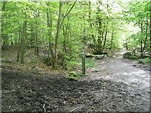 NJ8804 : Den Wood by Lizzie