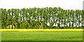 SU4689 : Farmland near East Hendred by Pam Brophy