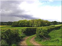 SU4070 : Farmland near Wickham by Pam Brophy