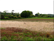 S7322 : Farmland and Countryside by Pam Brophy